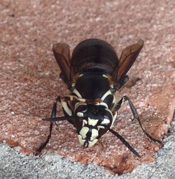 late summer bee and wasp control
