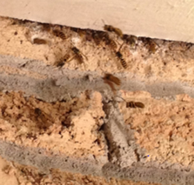 pest control port perry wasps